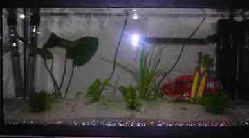 Quels sont les poissons les plus durs dans un aquarium?