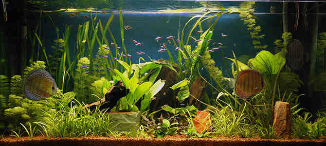 Comment avoir de belles plantes dans un aquarium?
