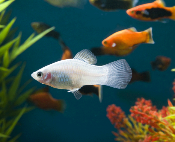 Comment choisir ses poissons d'aquarium?