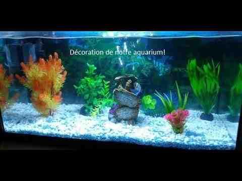 Comment décorer l'aquarium de poissons rouges?