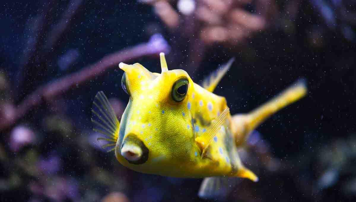 Comment déplacer un aquarium?