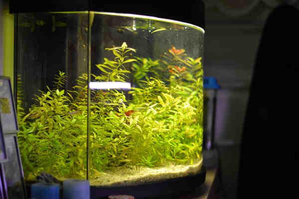 Comment éliminer le tanin du bois d'aquarium?