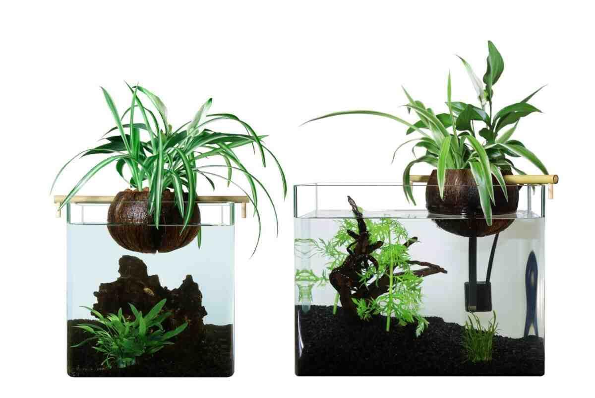 Comment entretenir un aquarium avec des plantes?