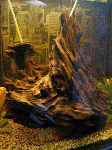Comment fabriquer un support de branche en bois dans un aquarium?