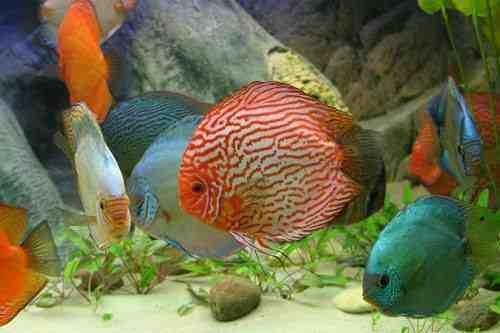 Comment faire de l'oxygène dans un aquarium ?