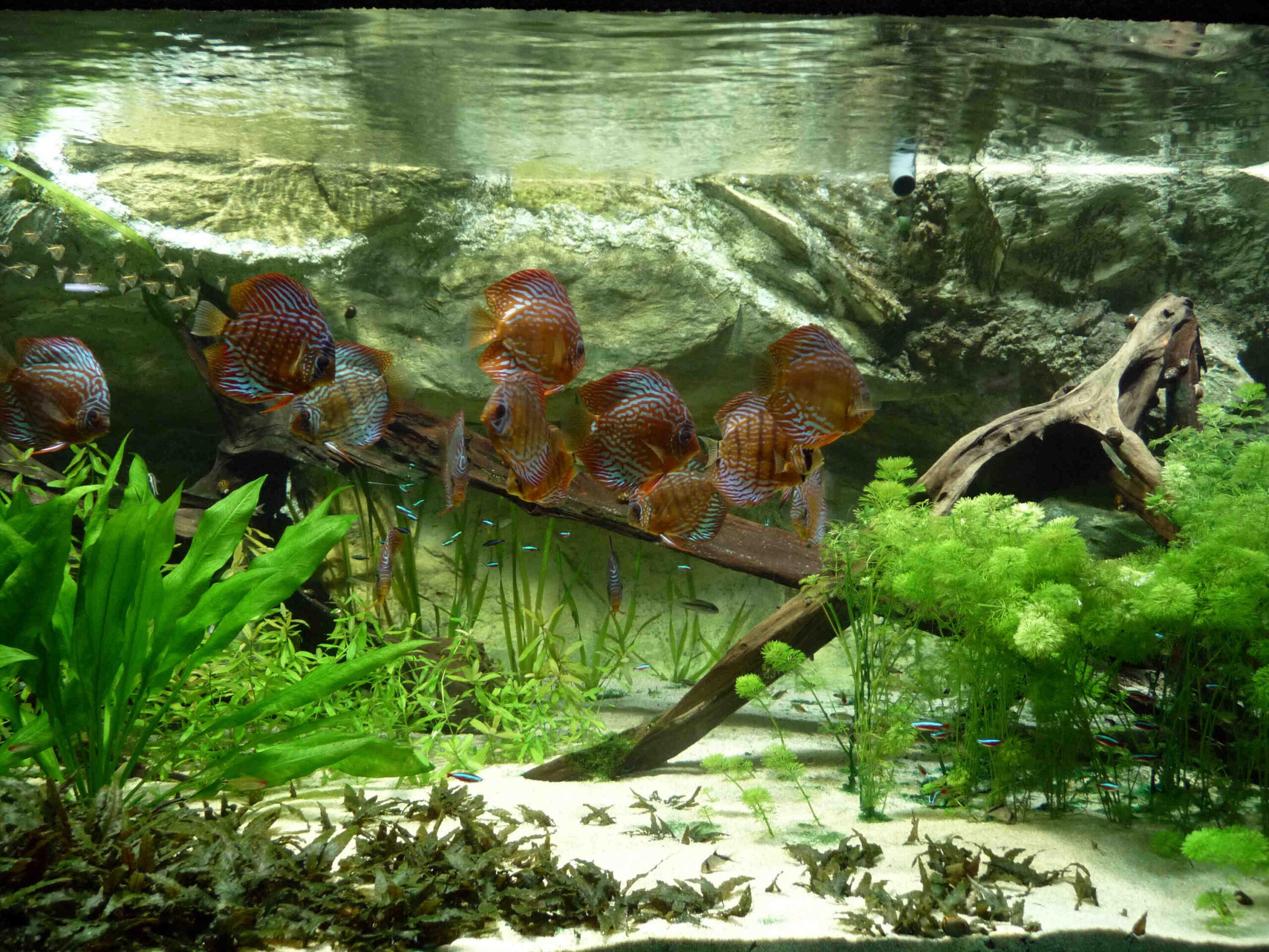 Comment faire un aquarium avec des plantes?
