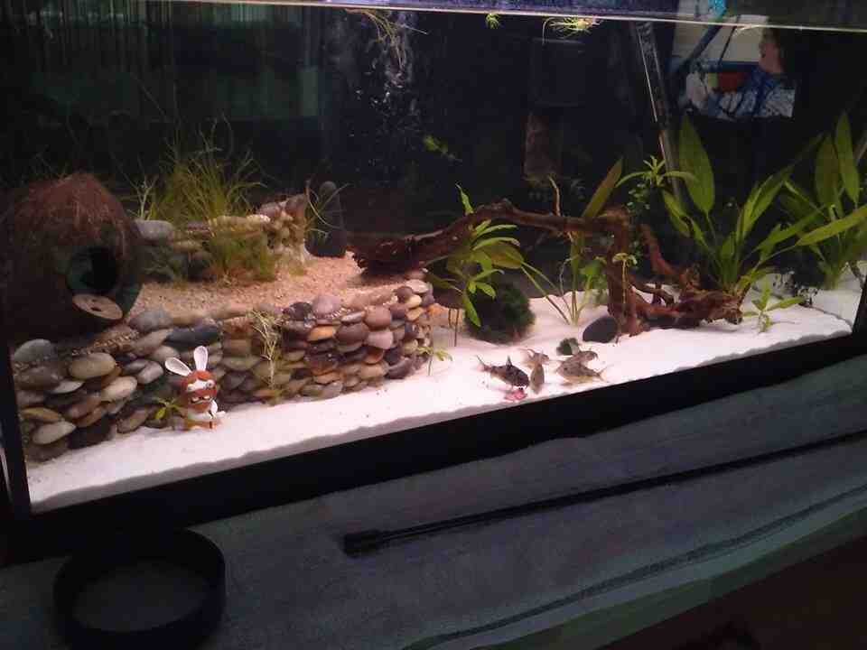 Comment faire un bel aquarium ?