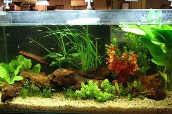 Comment faire un bon aquarium?