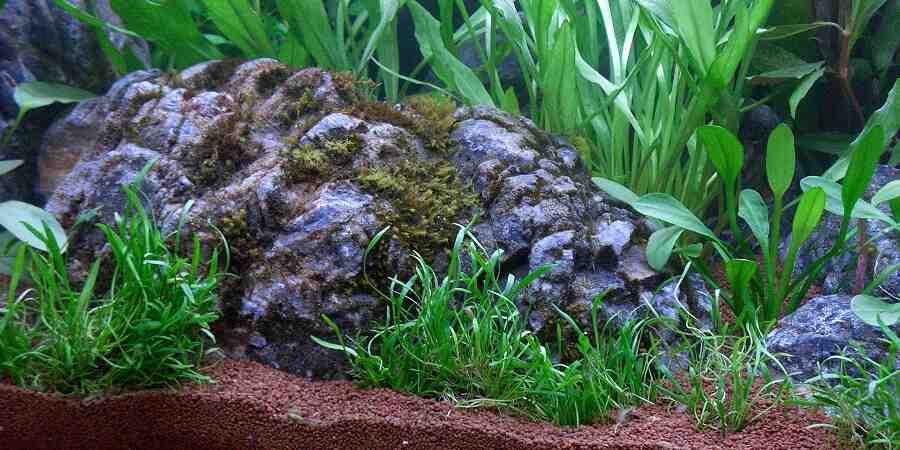 Comment faire une racine d'aquarium?