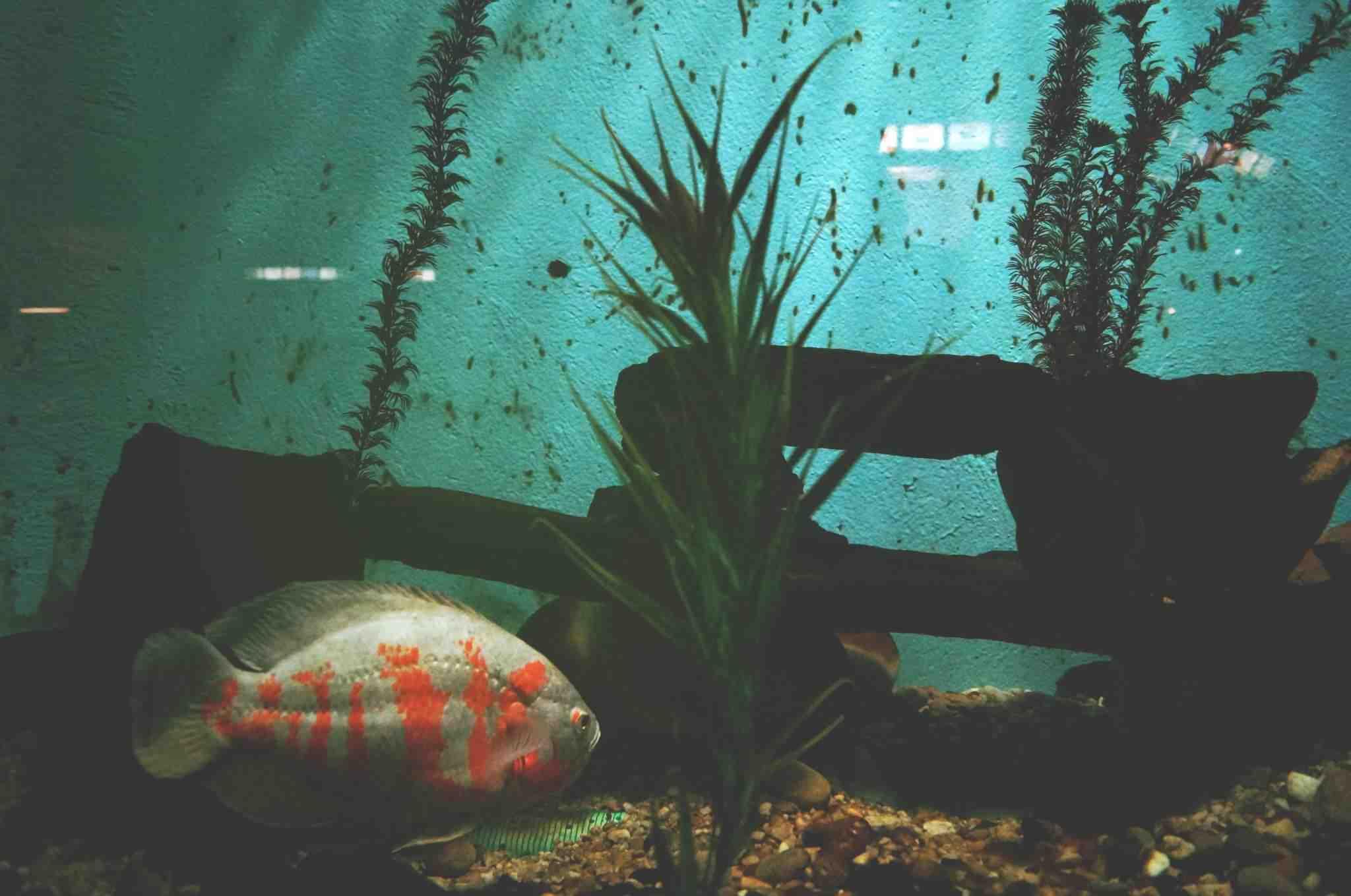 Comment garder de l'eau propre dans l'aquarium?