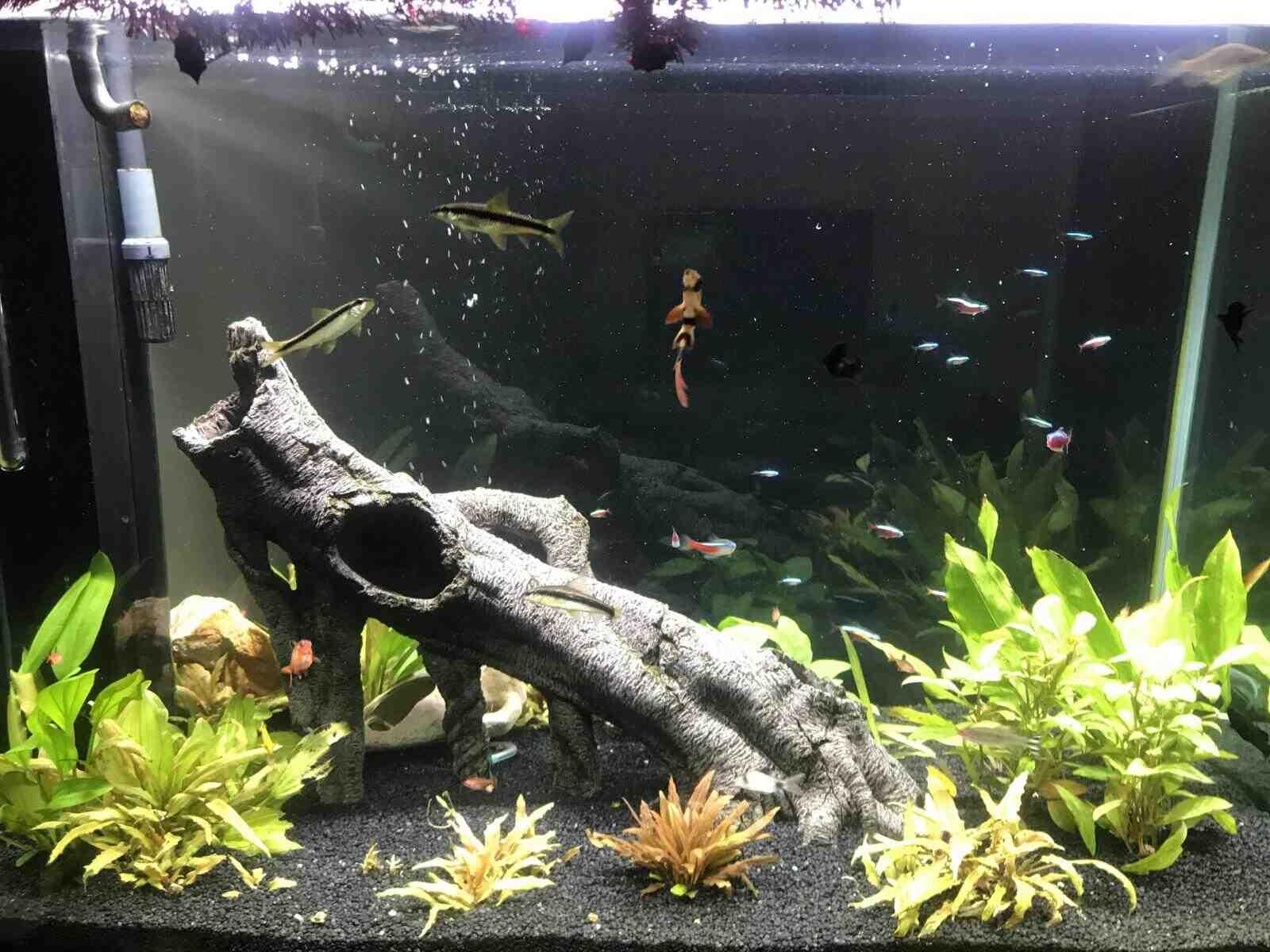 Comment gardez-vous les plantes au fond de l'aquarium?