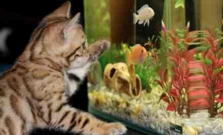 Comment lancer un aquarium ?