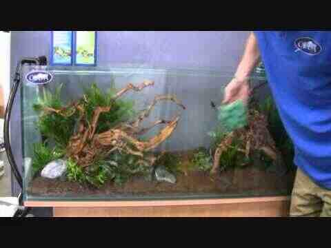 Comment looga sur l'aquarium en tanin de bois?