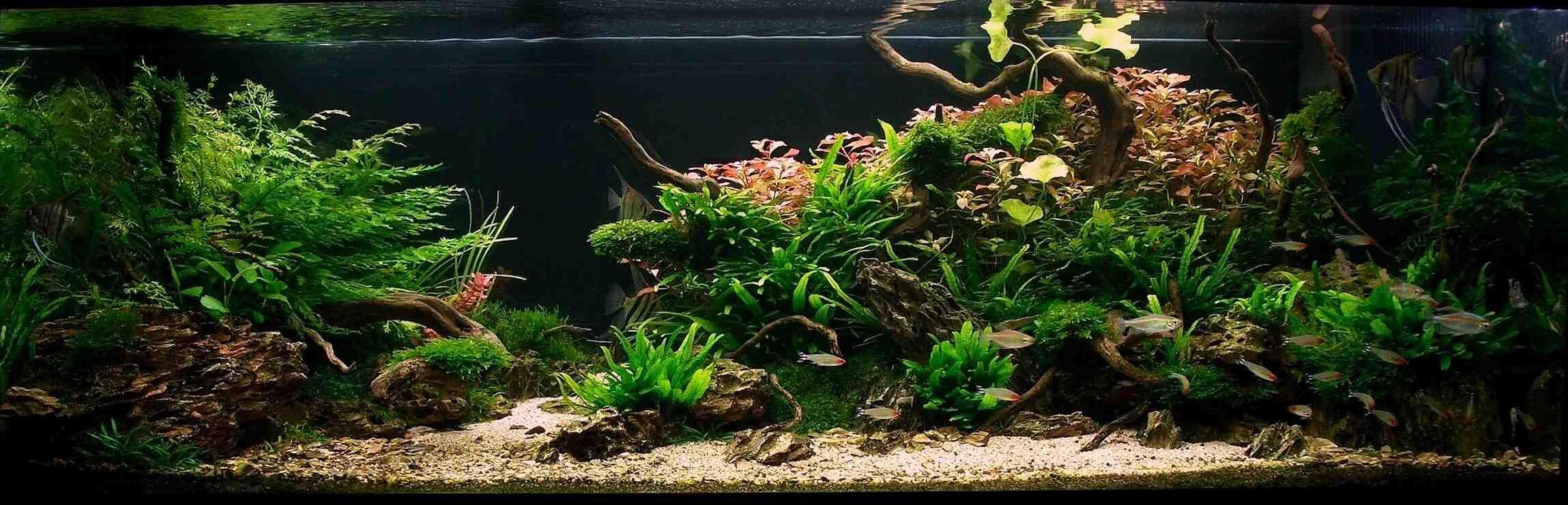Comment mettre des plantes dans l'aquarium déjà dans l'eau?