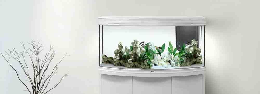 Comment mettre une branche dans un aquarium?