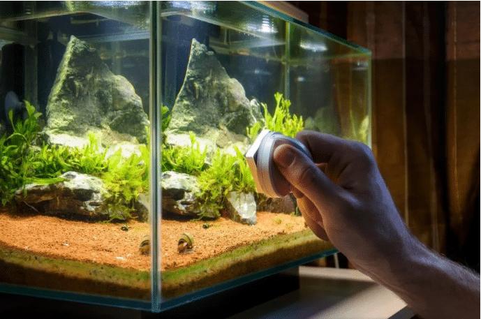 Comment nettoyer l'eau d'un aquarium ?