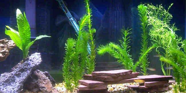 Comment réussir à conserver les plantes dans un aquarium?