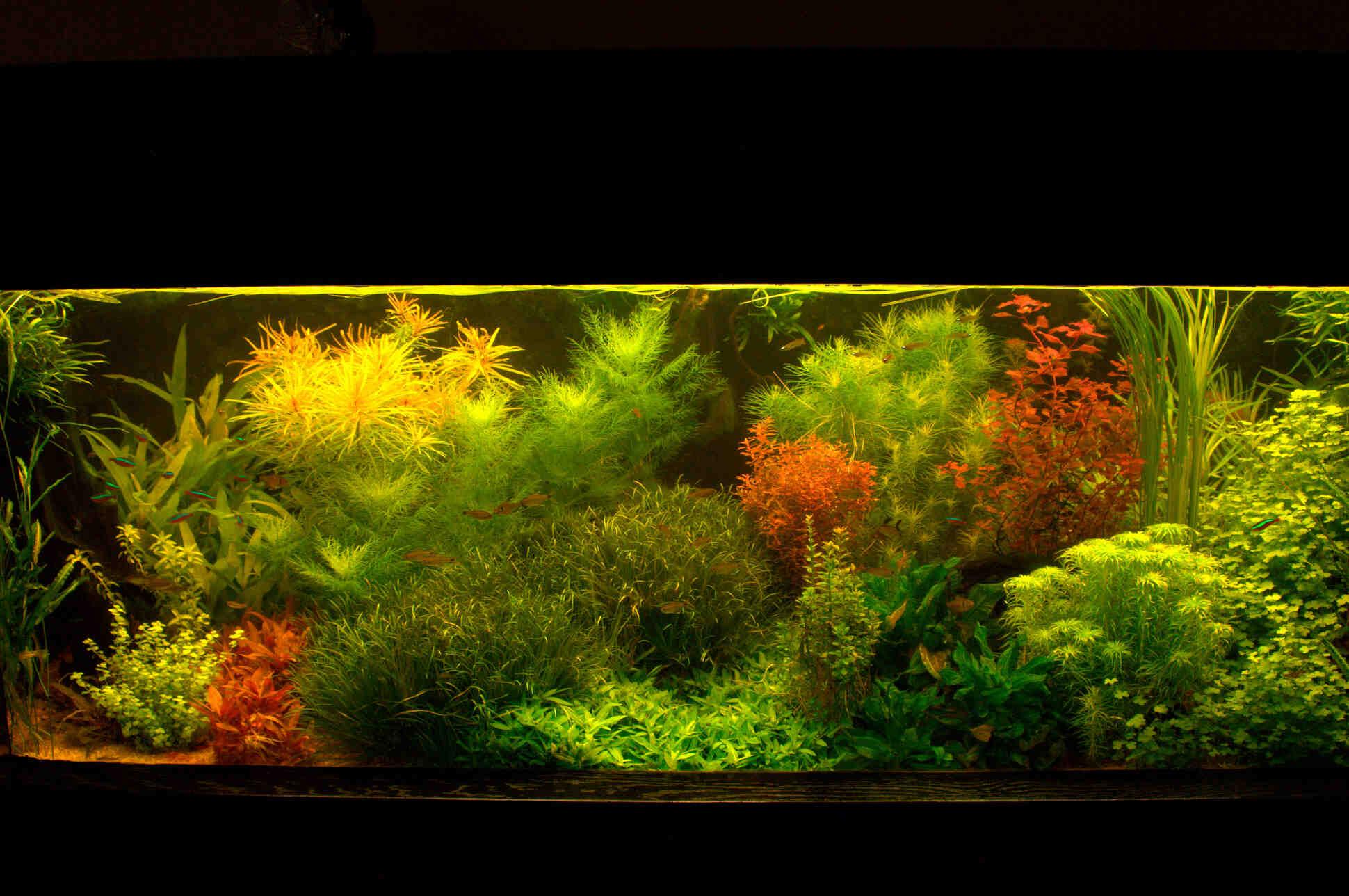 Comment savoir si l'aquarium est oxygéné?