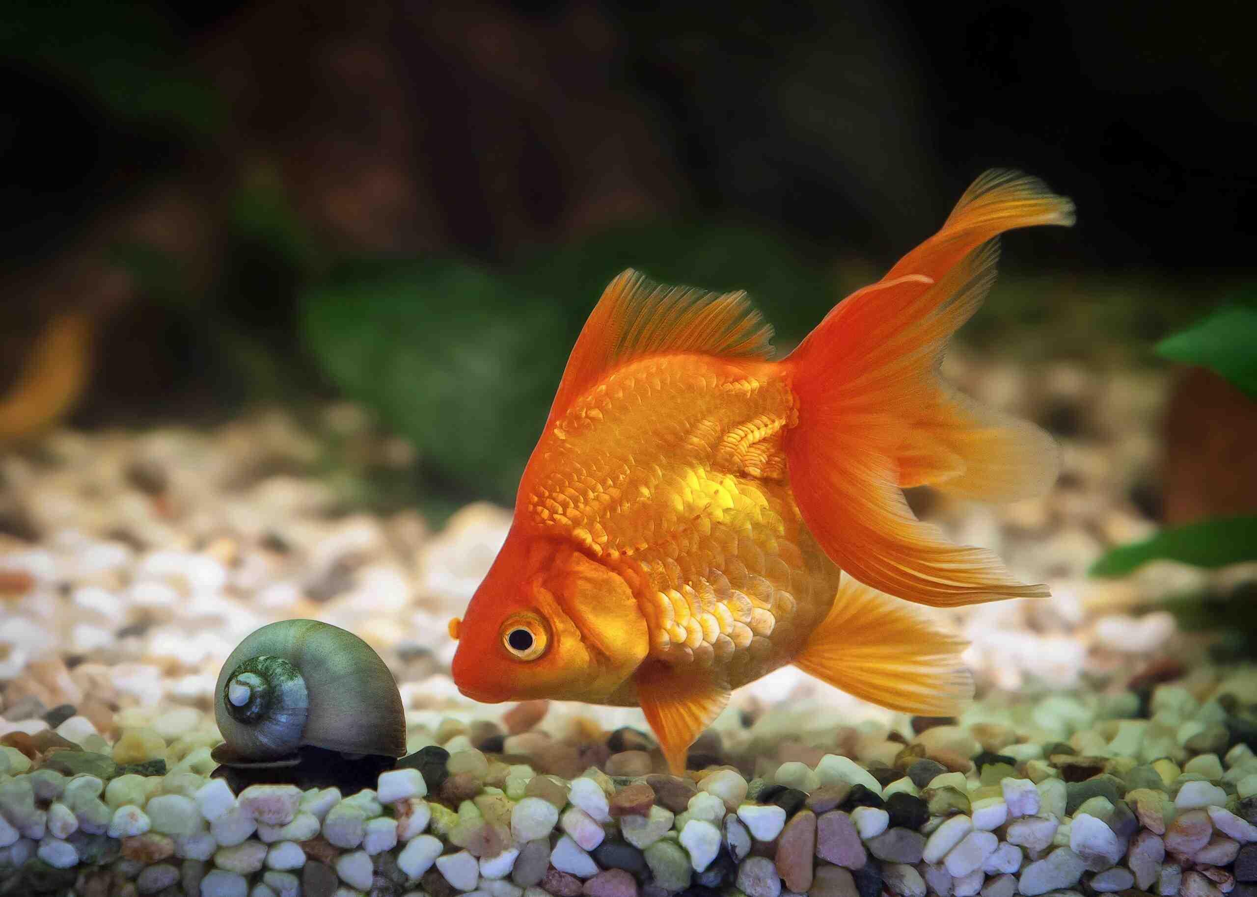 Comment se déplacer avec les poissons?