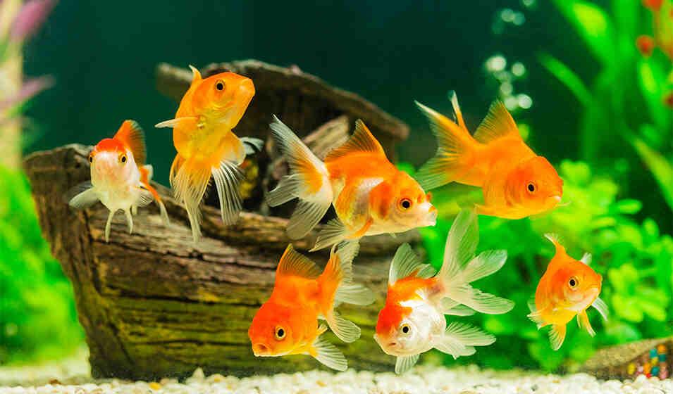 Comment transporter des poissons vivants?