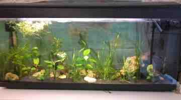 Comment transporter les poissons de bassin?