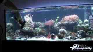 Comment vider et nettoyer l'aquarium?