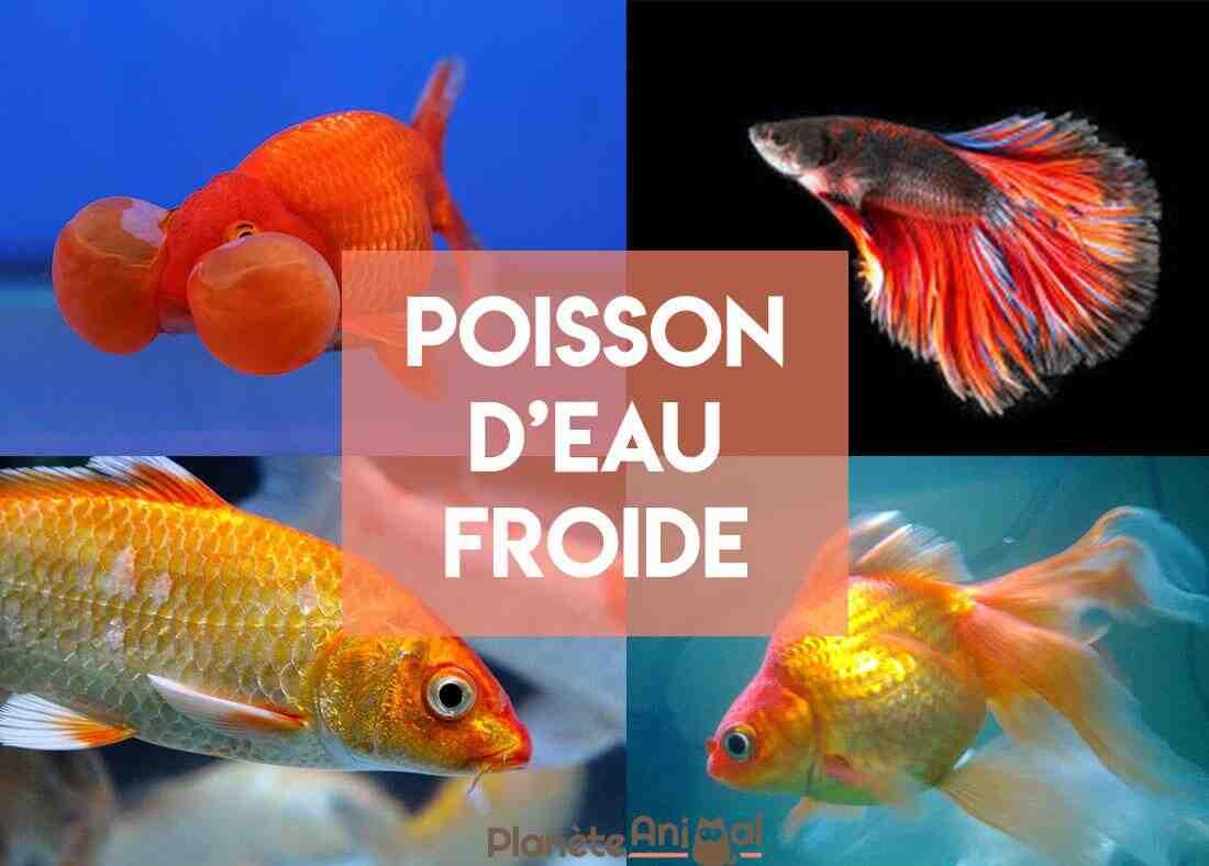 Mettre un poisson rouge dans un aquarium?