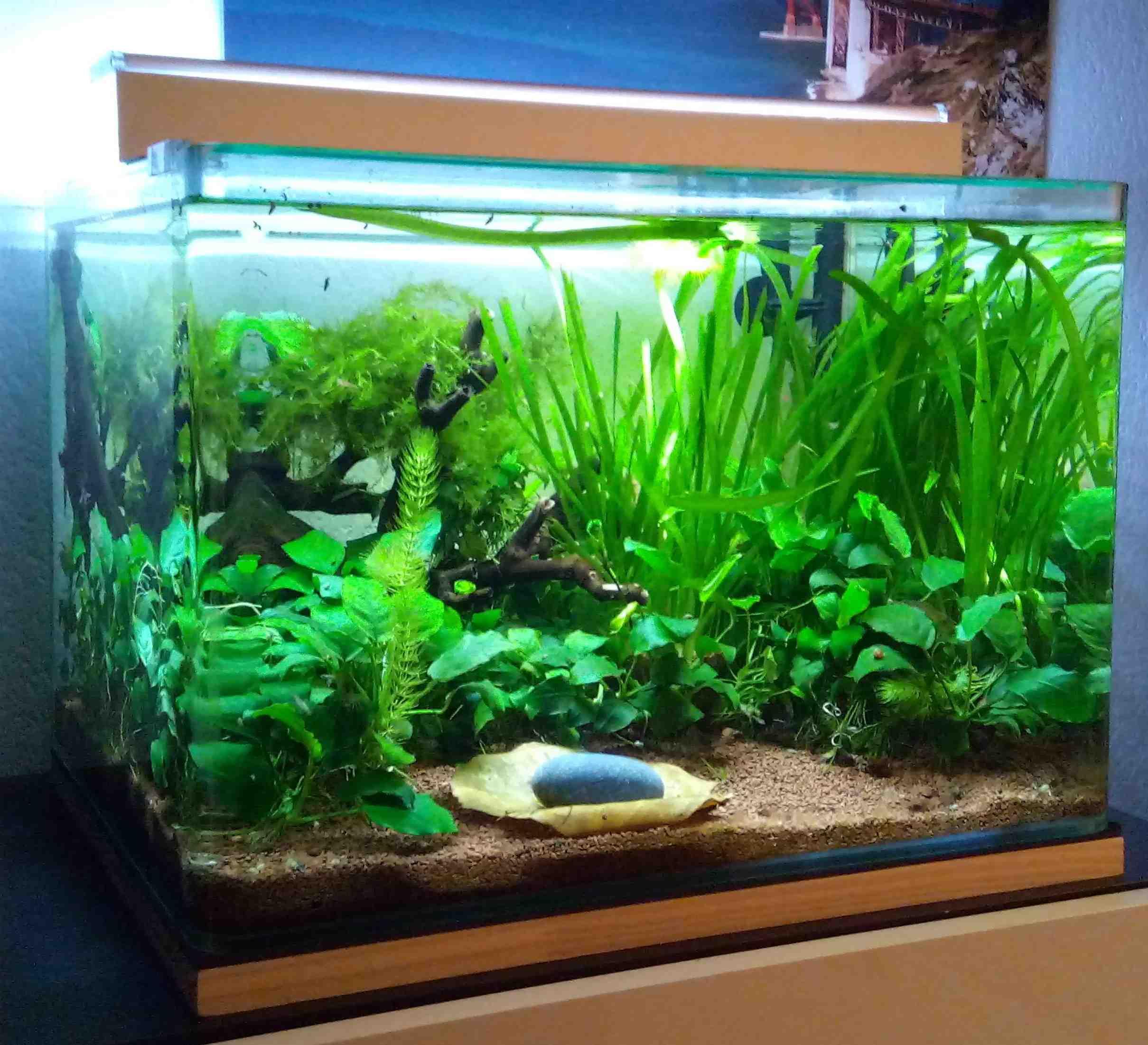 Où sont les poissons pour une nano pêche?