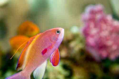 Pourquoi attendre 3 semaines pour un aquarium?