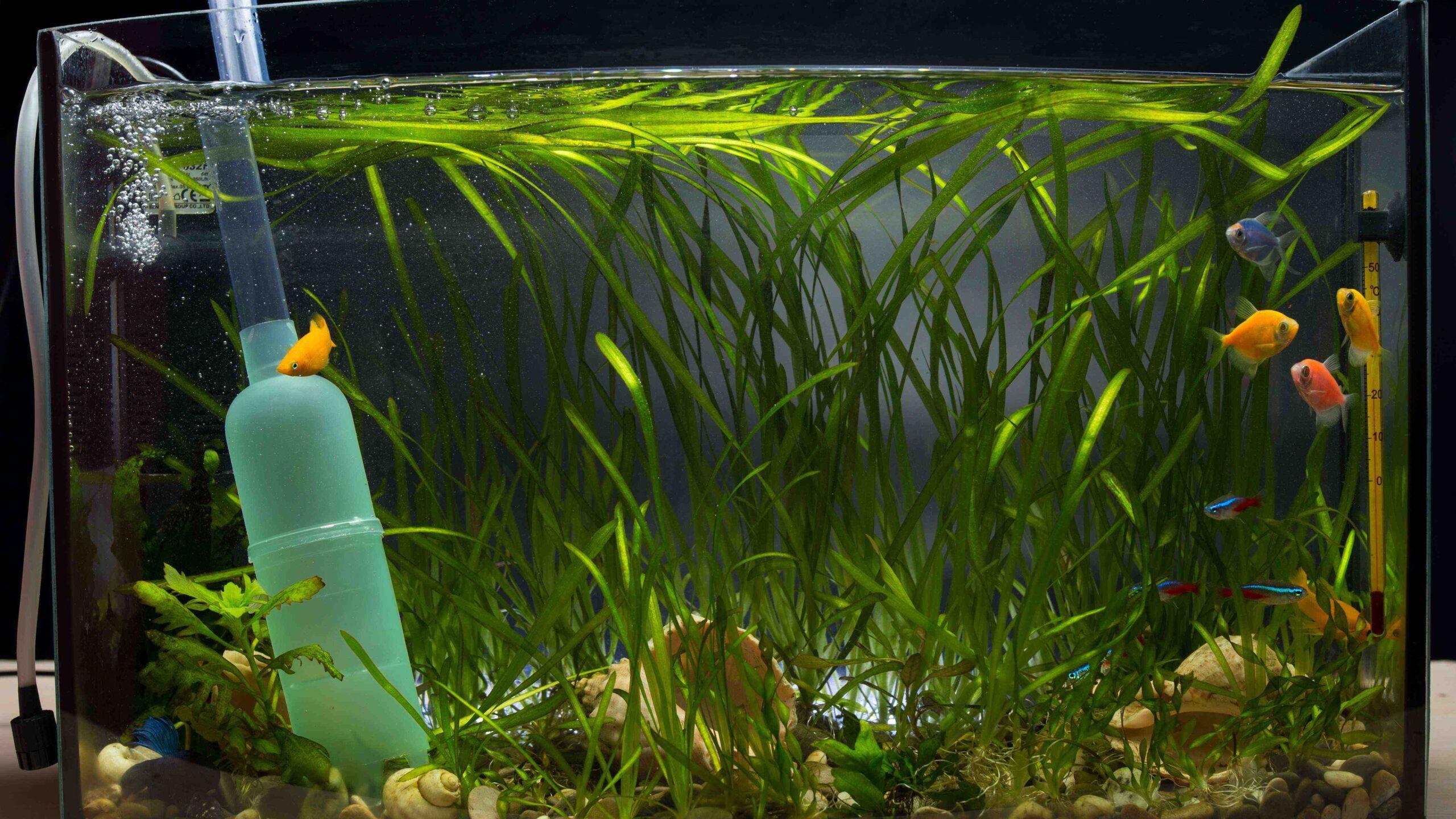 Pourquoi l'eau d'aquarium est-elle blanche?