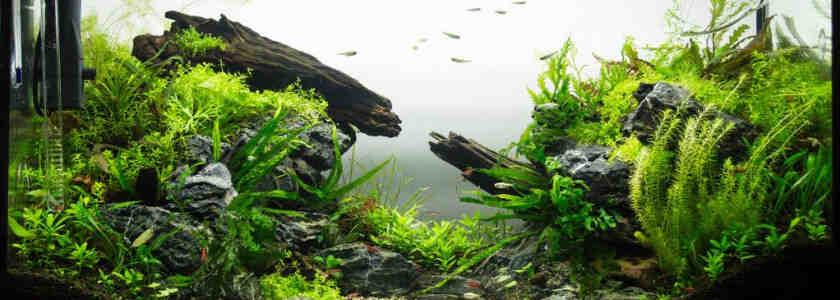 Pourquoi mes plantes d'aquarium ne poussent pas ?