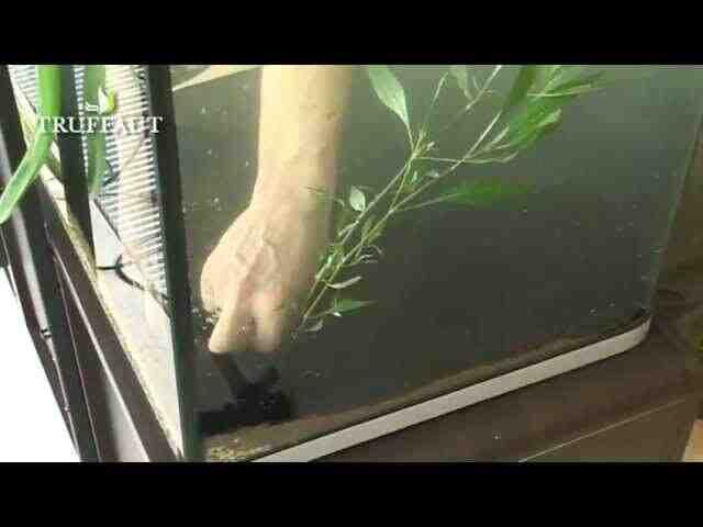 Pourquoi mettre des plantes dans un aquarium ?