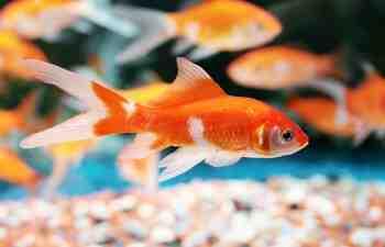 Pourquoi oxygéner l'aquarium?