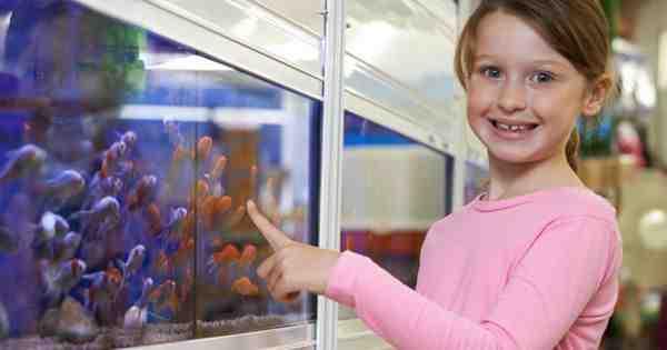 Pourquoi pêcher dans un aquarium de 20 litres?