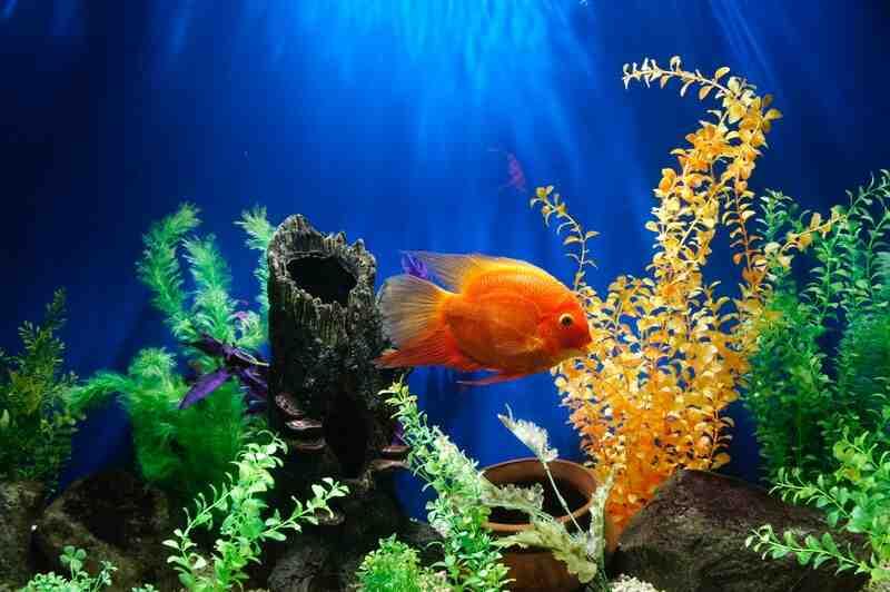 Quand allumez-vous la lampe de l'aquarium?