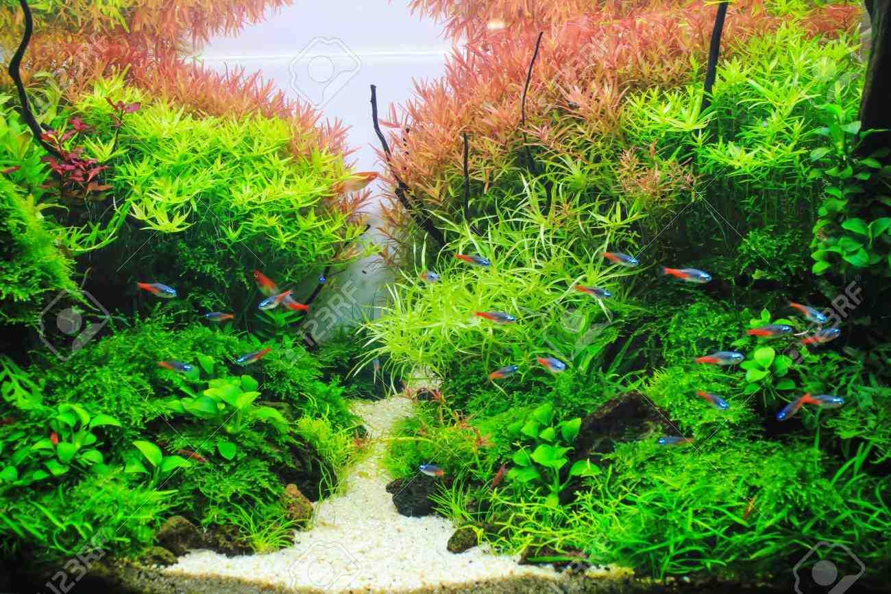 Quand les plantes peuvent-elles être placées dans l'aquarium?