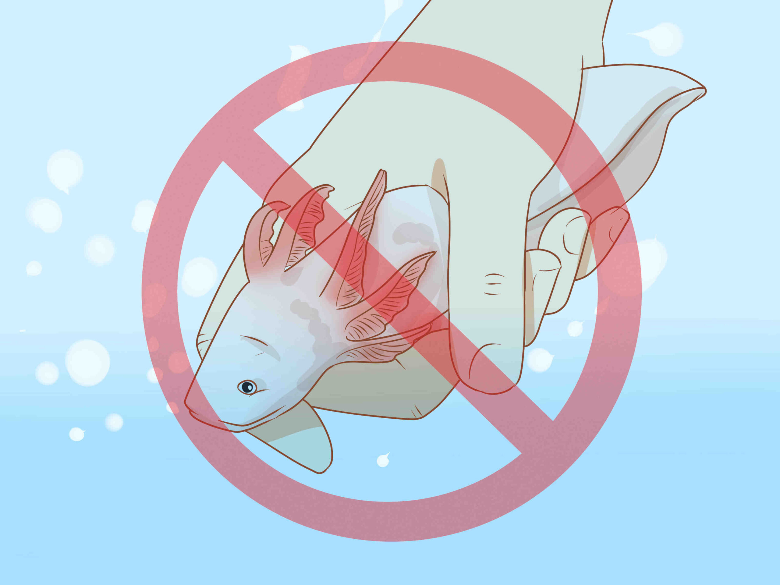 Quand nourrir l'axolotl?