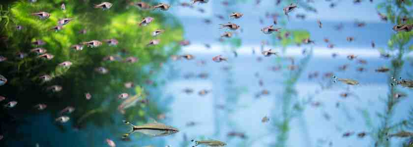 Que diriez-vous d'un poisson pour un aquarium de 10 litres?