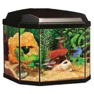 Que diriez-vous d'un poisson pour un aquarium de 20 litres?