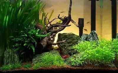 Quel décor pour un aquarium?
