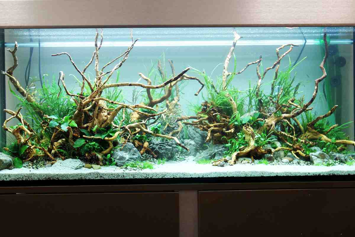 Quel est le meilleur terrain pour l'aquarium de crevettes?