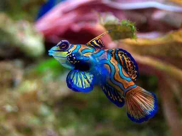 Quel est le plus beau poisson d'aquarium ?