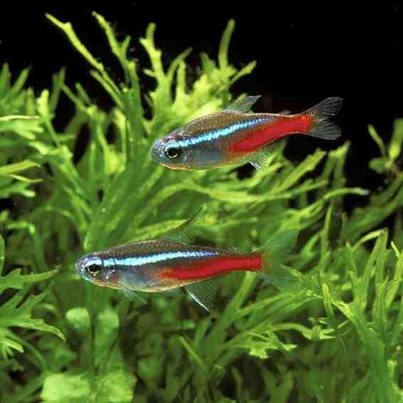 Quel poisson avec du bleu fluo?