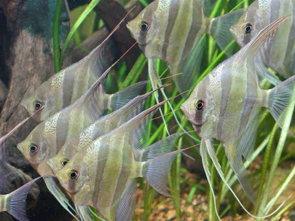 Quel poisson avec un scalaire ?