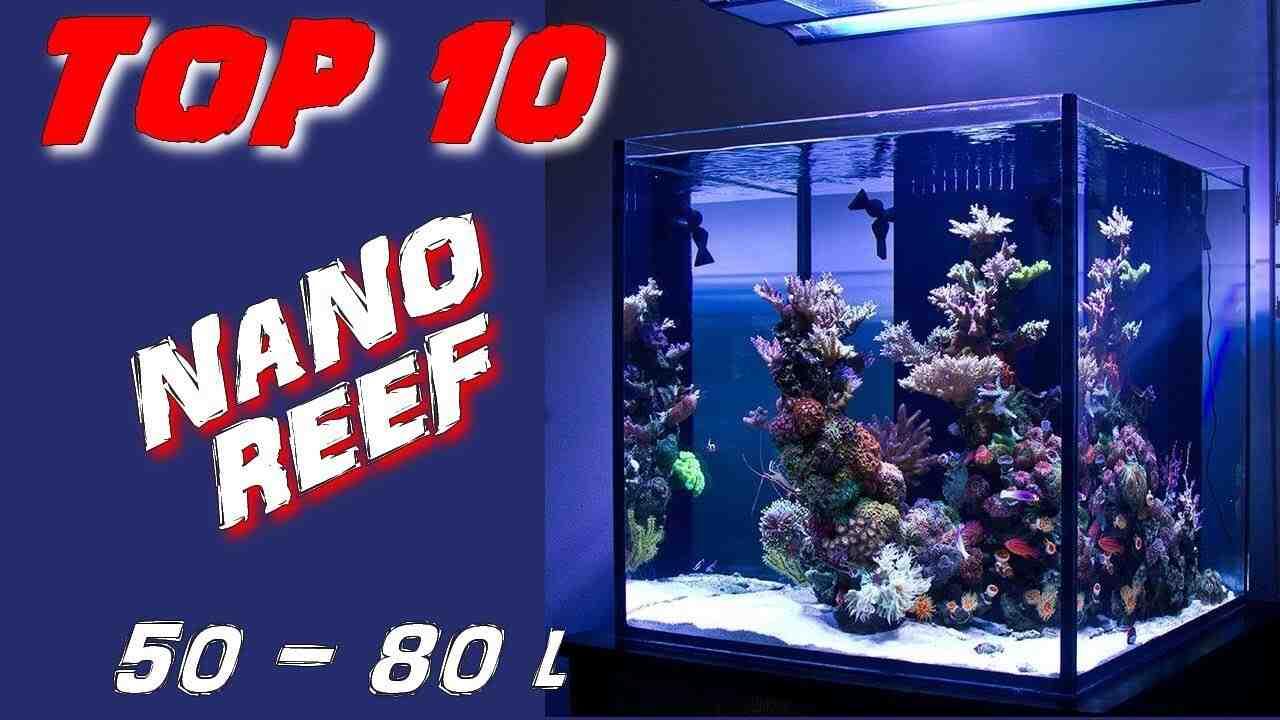 Quel poisson choisir pour un aquarium de 300 l?