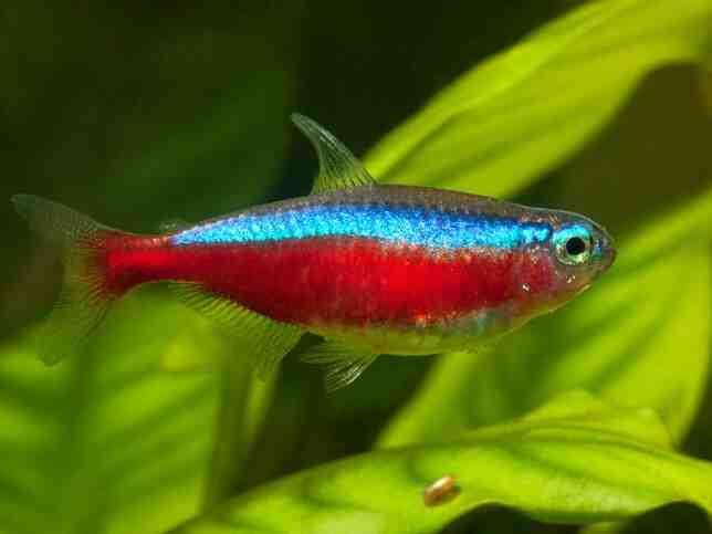 Quel poisson dans un aquarium de 20 litres?