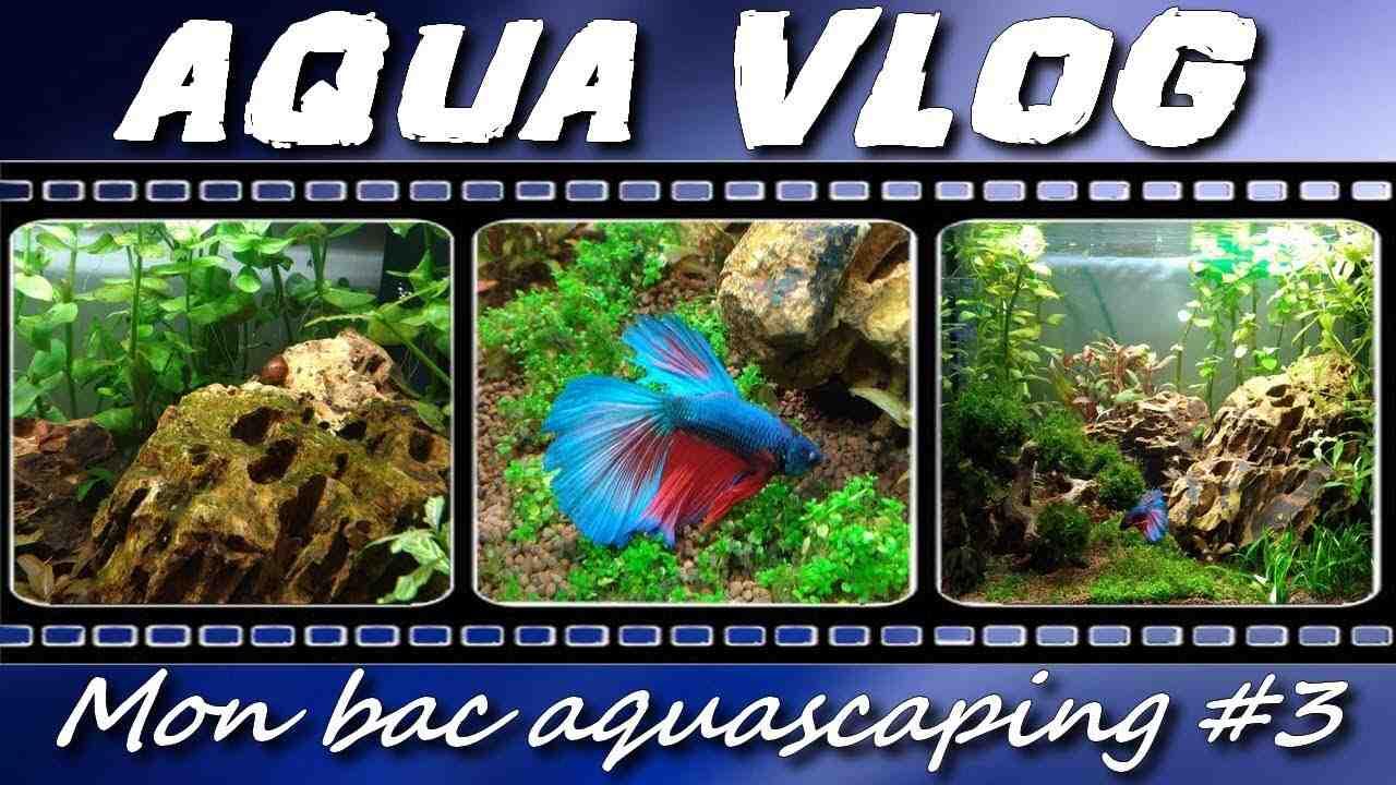 Quel poisson dans un aquarium de 50 litres?