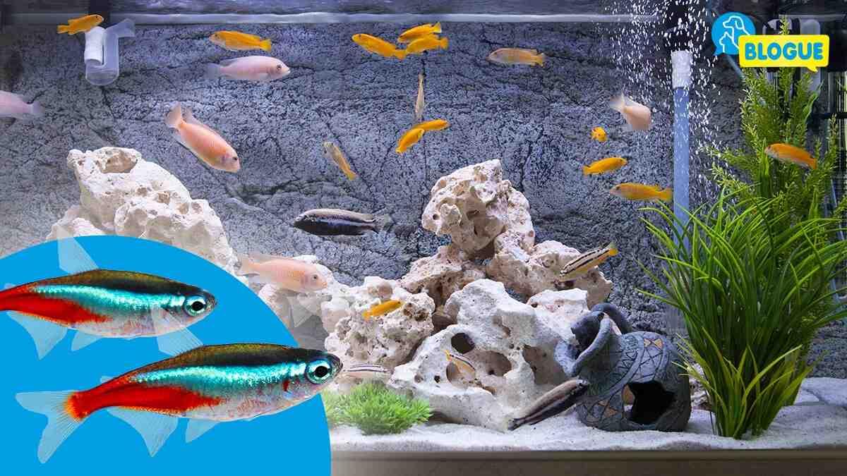 Quel poisson dans un aquarium de 60 litres?