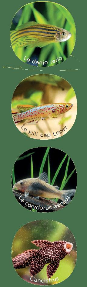 Quel poisson dans une cuve de 150 l?