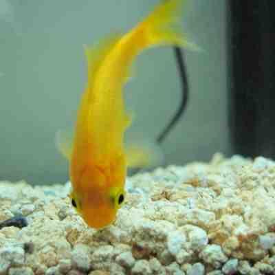 Quel poisson facile pour un petit aquarium?
